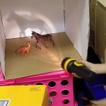 Science Explorations with Open-Ended Materials